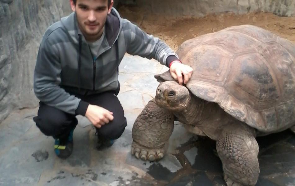 Já a želva