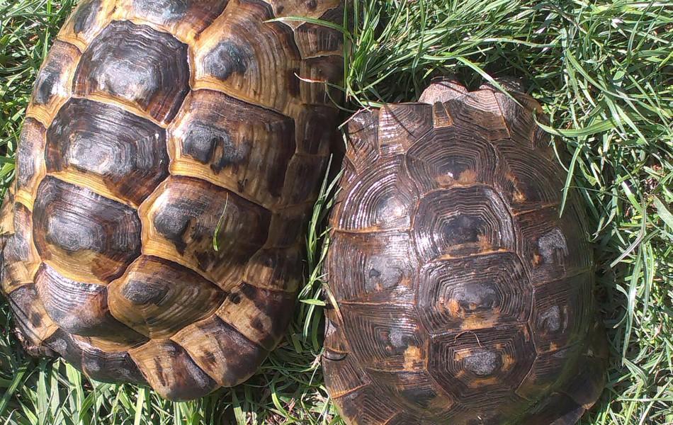 2 Samci T.g.i.