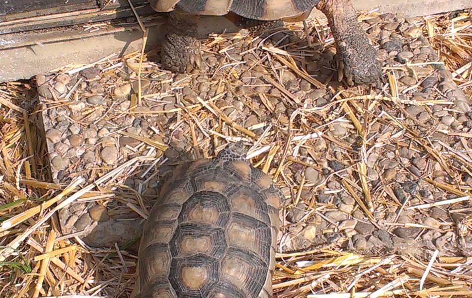 Samice T. marginata - asi malá bouda :-)